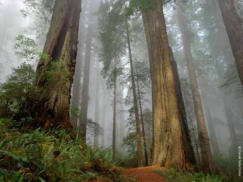 hutan14 Inilah 24 Rekor Dunia yang Masih Dipegang Indonesia